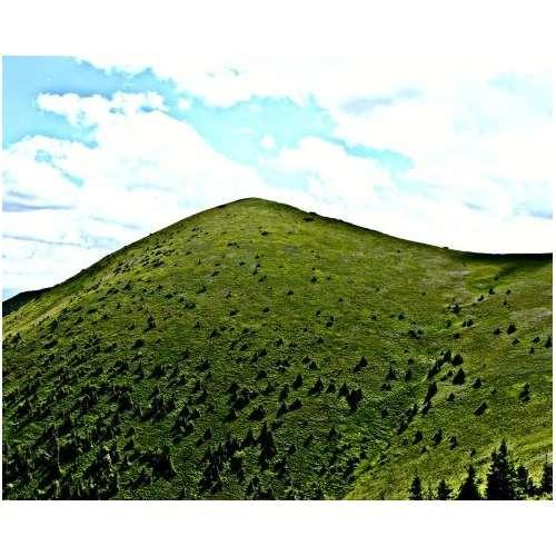 Drożdże FM55 Zielone wzgórze