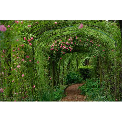 Drożdże FM Magiczny ogród