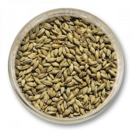 Słód pilzneński Viking Malt (3.2-4.5 EBC) 1kg